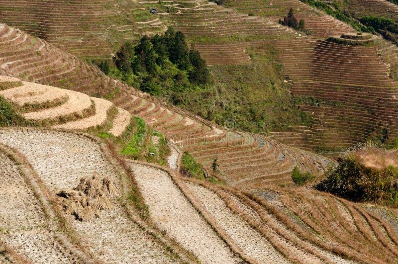 Paesaggio della Cina - terrazzi del riso della spina dorsale del ` s del drago fotografie stock