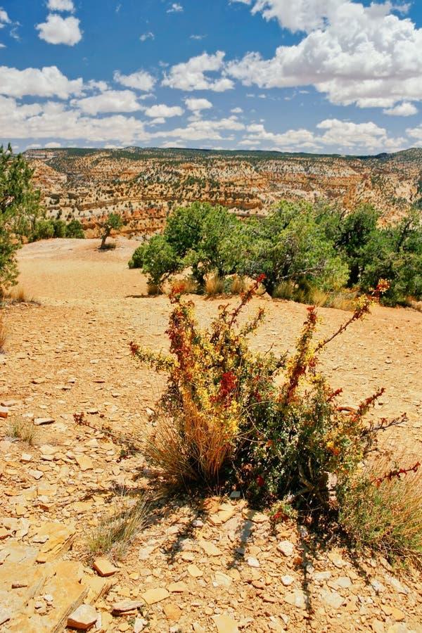 Paesaggio della condizione dell'Utah fotografia stock libera da diritti