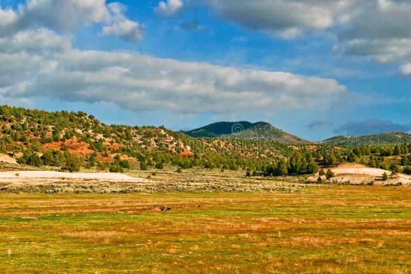 Paesaggio della condizione dell'Utah immagine stock libera da diritti
