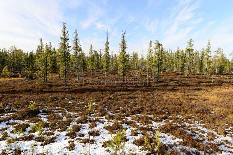 Paesaggio della foresta in autunno nel taiga russo fotografia stock libera da diritti