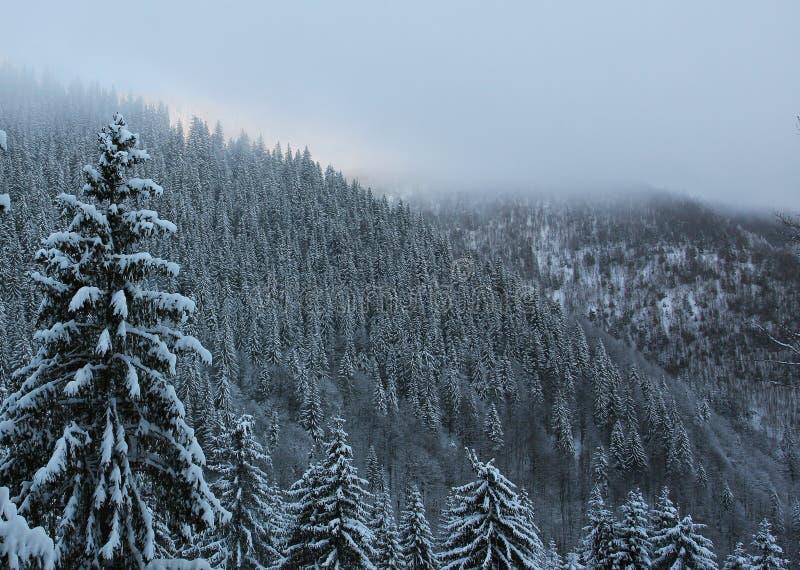 Paesaggio della foresta della montagna di inverno fotografia stock libera da diritti