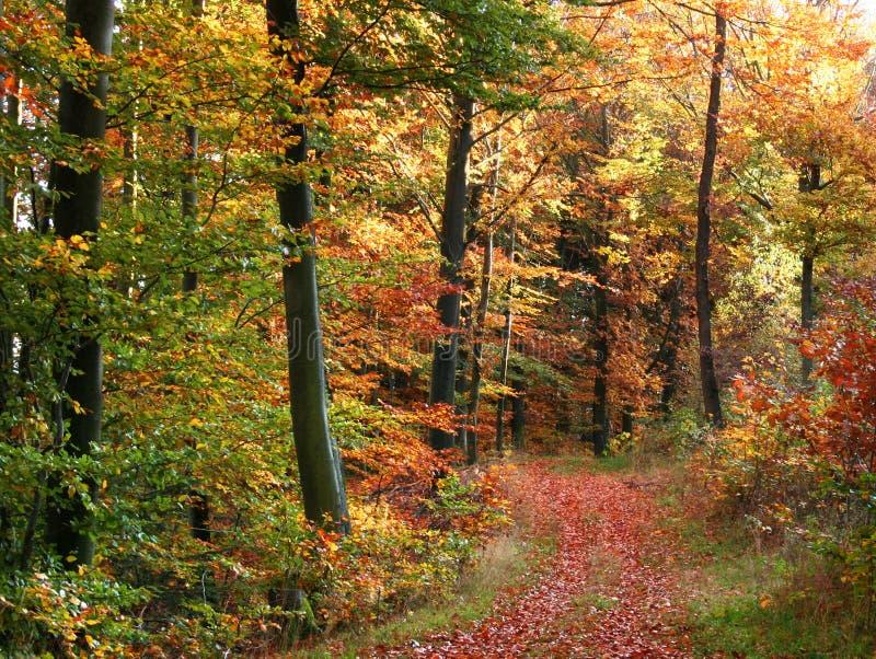 Paesaggio della foresta di autunno immagine stock