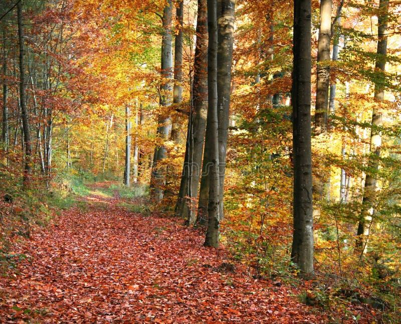 Paesaggio della foresta di autunno immagini stock libere da diritti