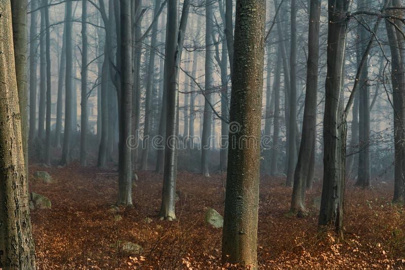 Paesaggio della foresta di autunno di alba nella mattina nebbiosa di autunno fotografia stock libera da diritti