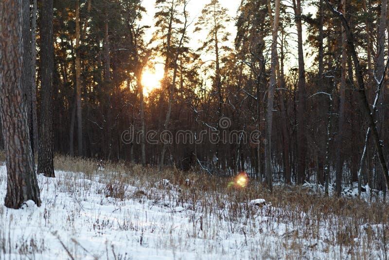 Paesaggio della foresta di inverno immagine stock libera da diritti