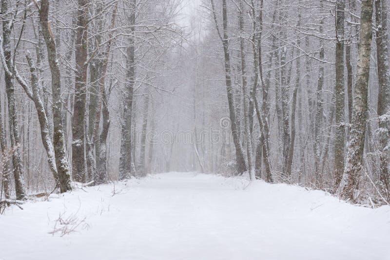 Paesaggio della foresta di inverno Strada innevata in Forest During The Snowfall Storia di inverno con Forest And Road Amon innev immagini stock