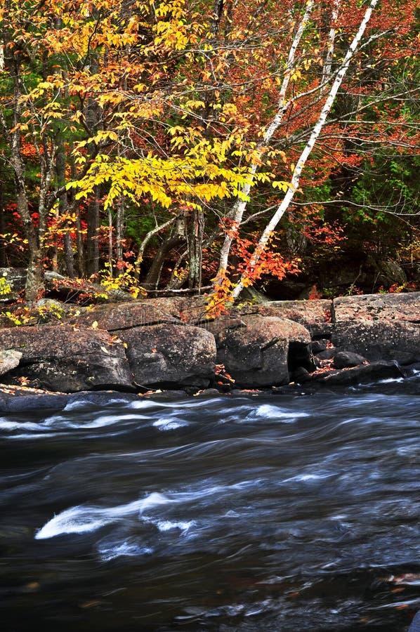 Paesaggio della foresta e del fiume di caduta fotografie stock libere da diritti
