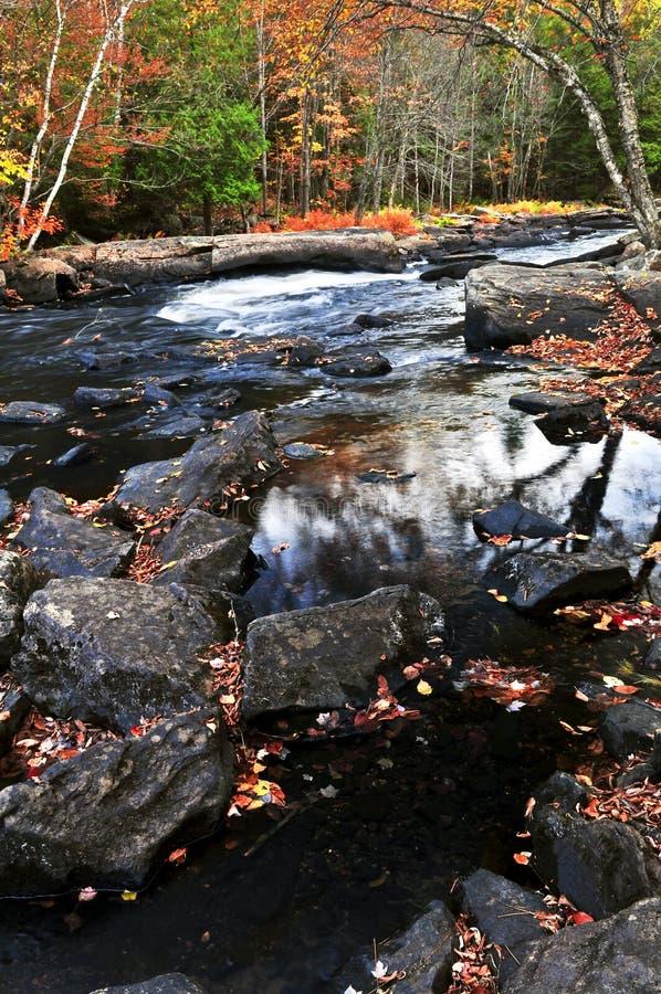 Paesaggio della foresta e del fiume di caduta fotografia stock libera da diritti