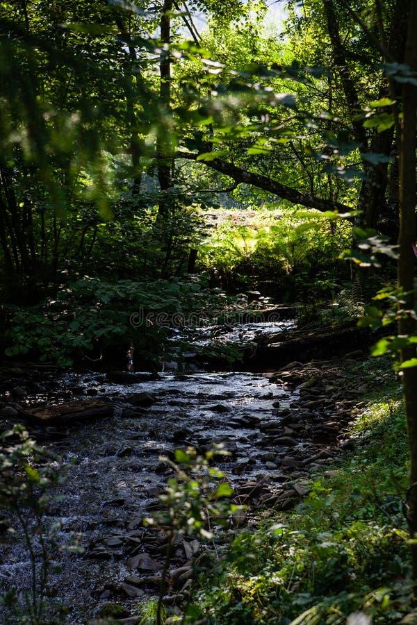 Paesaggio della foresta Estate nelle montagne fotografie stock