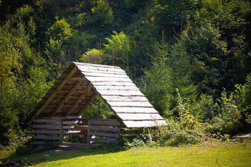 Paesaggio della foresta Estate nelle montagne immagine stock libera da diritti