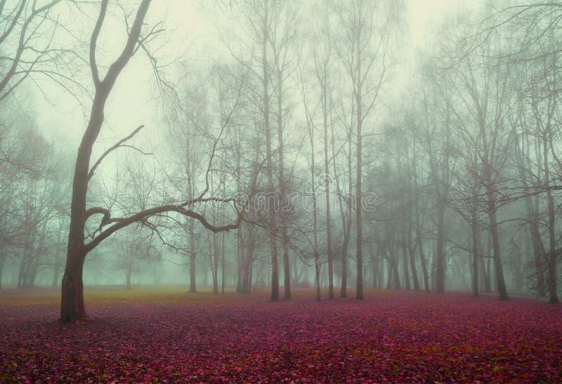 Paesaggio della foresta della natura di autunno - vista nebbiosa di autunno del parco di autunno in nebbia densa di autunno fotografia stock libera da diritti