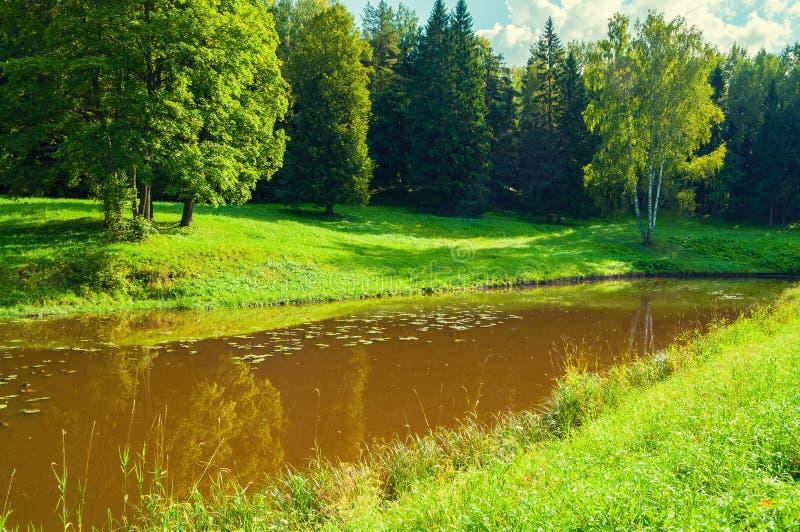 Paesaggio della foresta della primavera Alberi verdi della molla vicino al fiume in tempo soleggiato fotografie stock libere da diritti