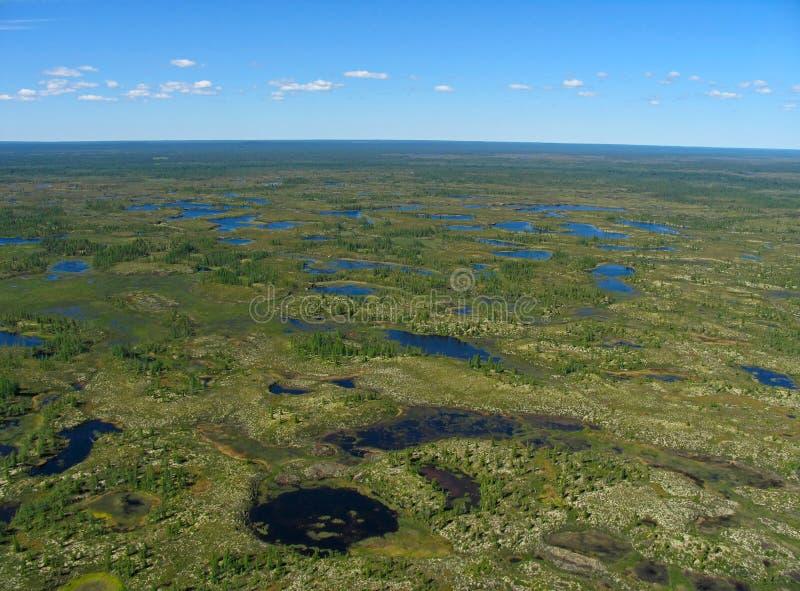 paesaggio della Foresta-tundra fotografie stock libere da diritti
