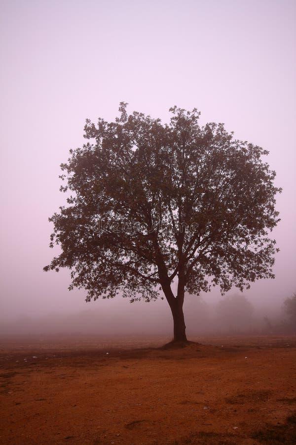 Paesaggio della foschia della foresta di autunno Siluetta degli alberi della nebbia della foresta in autunno Fondo degli alberi d immagini stock