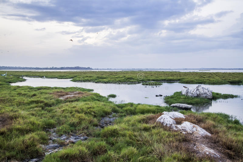 Paesaggio della laguna della baia di Arugam, Sri Lanka fotografie stock libere da diritti