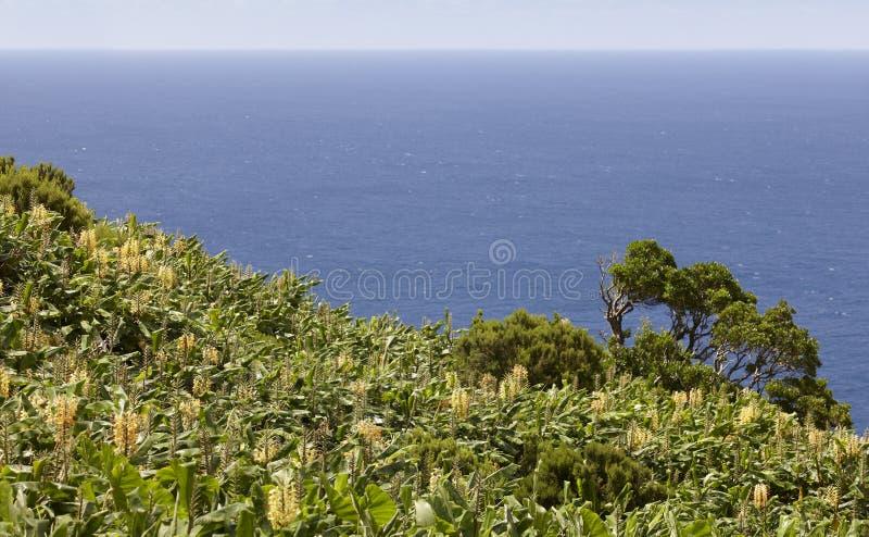 Paesaggio della linea costiera delle Azzorre in Faja grande, isola del Flores Portug fotografie stock libere da diritti