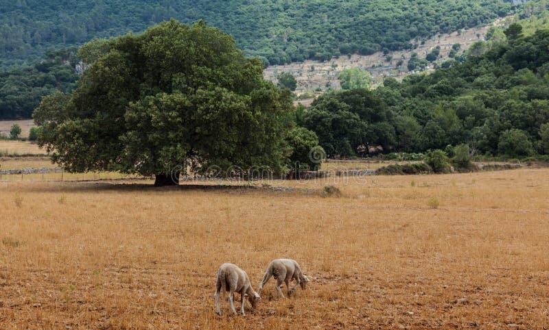 Paesaggio della Mallorca