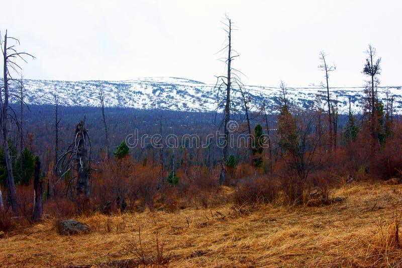 Download Paesaggio della montagna immagine stock. Immagine di neve - 30831973