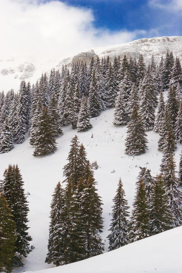 Download Paesaggio della montagna immagine stock. Immagine di foreste - 3888573
