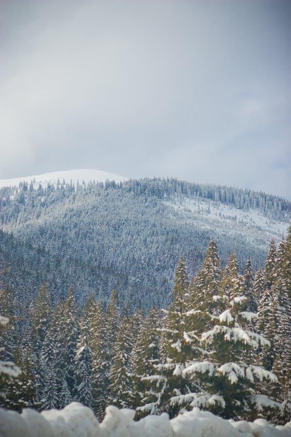 Download Paesaggio della montagna immagine stock. Immagine di foresta - 3888679