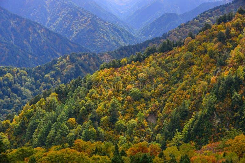 Paesaggio della montagna all'autunno nel Giappone fotografie stock libere da diritti