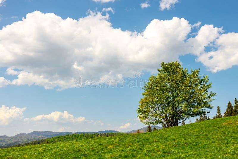 Paesaggio della montagna con gli alberi fotografia stock libera da diritti