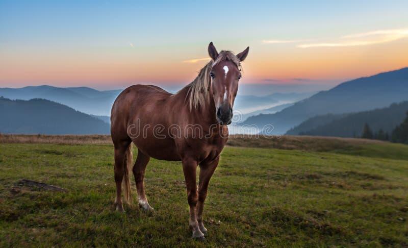 Paesaggio della montagna con il pascolo del cavallo immagini stock libere da diritti