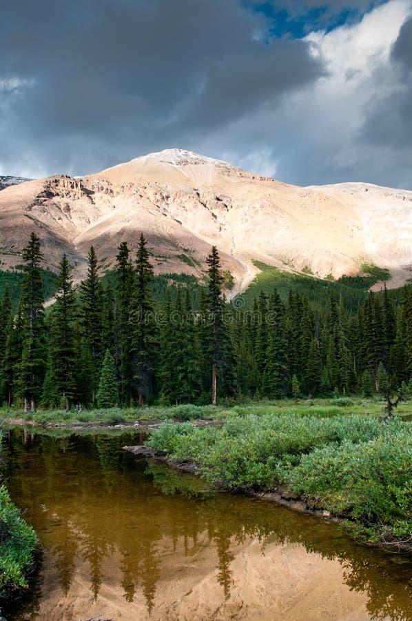 Paesaggio della montagna con il piccolo stagno nel parco nazionale di Banff immagine stock