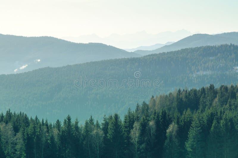 Paesaggio della montagna con l'abete rosso e pini nelle alpi durante il giorno soleggiato nell'orario invernale immagine stock