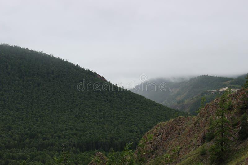 Paesaggio della montagna della foresta fotografie stock