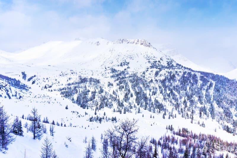 Paesaggio della montagna di Snowy del canadese Montagne Rocciose nell'inverno immagini stock