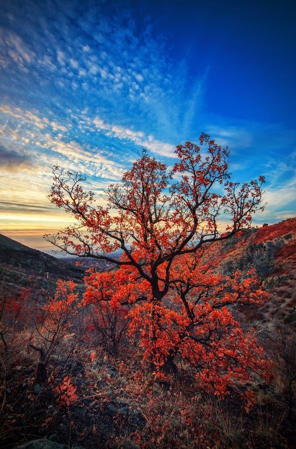 Paesaggio della montagna ed albero di autunno fotografie stock libere da diritti