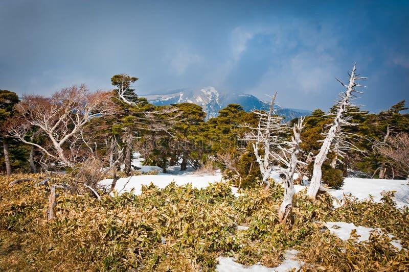 Paesaggio della montagna a Hallasan fotografie stock libere da diritti