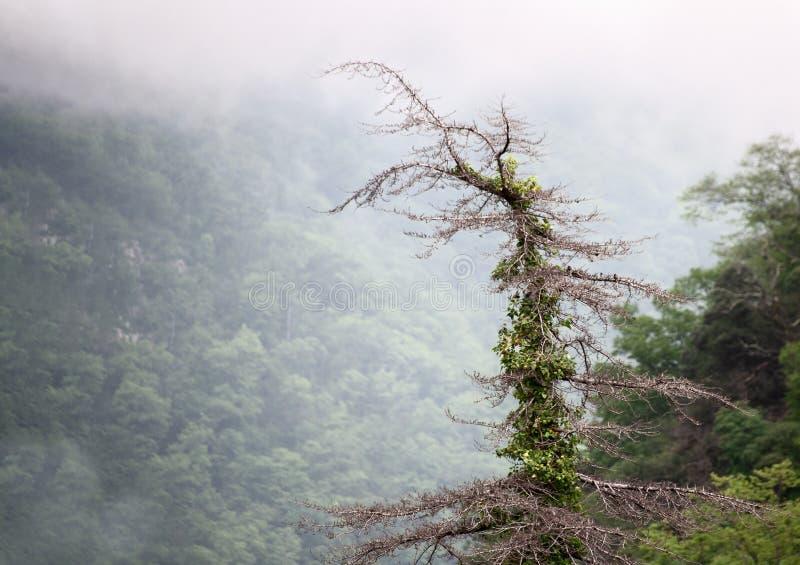 Paesaggio della montagna nebbiosa con un singolo albero irsuto e nuvole sul primo piano superiore fotografie stock libere da diritti