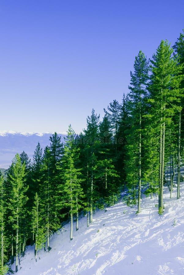 Paesaggio della montagna nel giorno gelido di inverno soleggiato con immagini stock libere da diritti