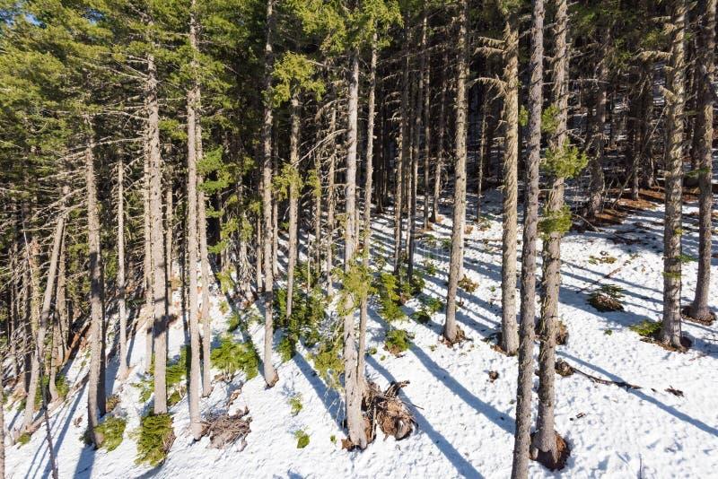 Paesaggio della montagna nel giorno gelido di inverno soleggiato con il chiaro cielo blu fotografia stock