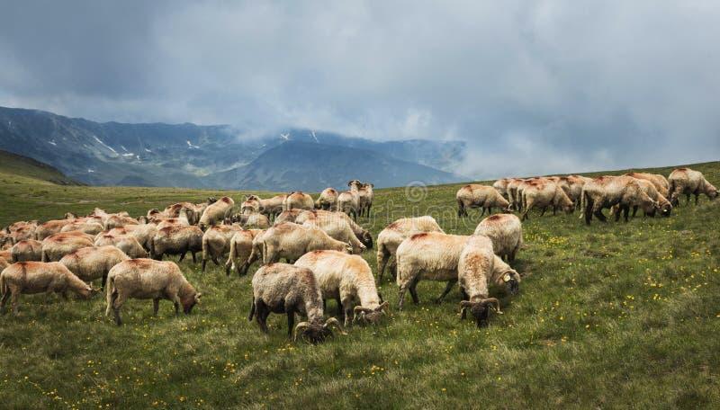 Download Paesaggio Della Montagna Strada Di Elevata Altitudine Nei Carpathians Fotografia Stock - Immagine di montagna, nube: 56879398