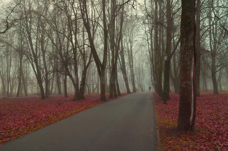 Paesaggio della natura di autunno - vista nebbiosa di autunno del vicolo del parco di autunno in nebbia densa di autunno fotografia stock libera da diritti