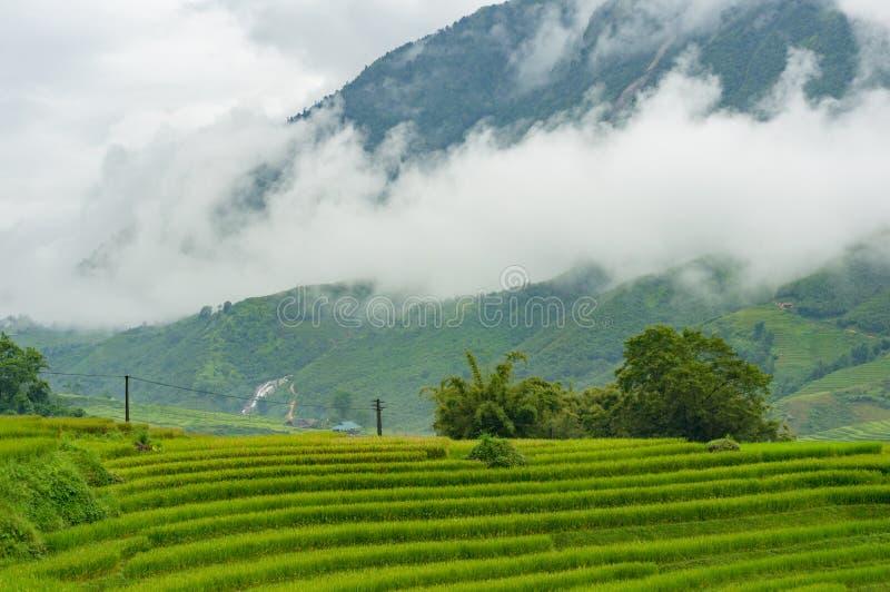 Paesaggio della natura di bei terrazzi del riso fotografie stock