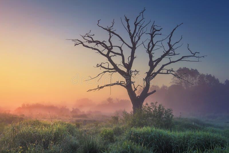 Paesaggio della natura selvaggia con il vecchio albero alla luce solare nebbiosa nel primo mattino all'alba Natura perfetta ad al fotografia stock