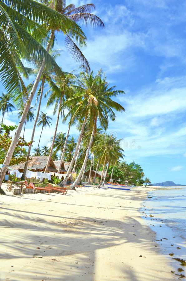 Paesaggio della natura: Spiaggia tropicale sabbiosa con acqua cristallina e le palme fotografie stock libere da diritti