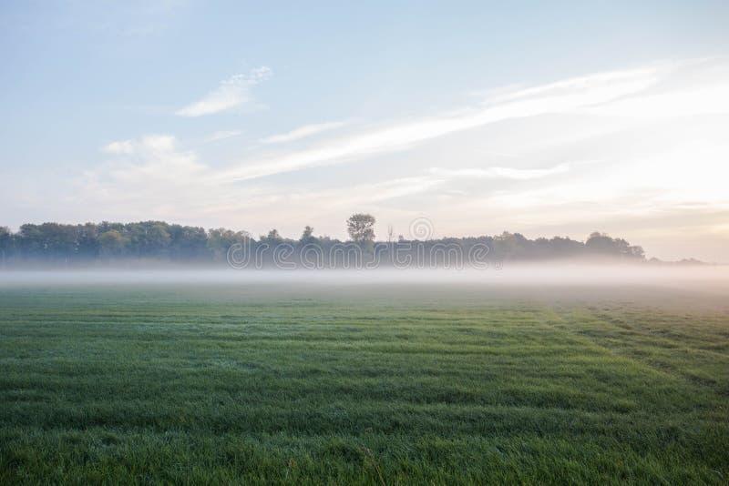 Paesaggio della nebbia Foschia di primo mattino nel prato con gli alberi immagini stock