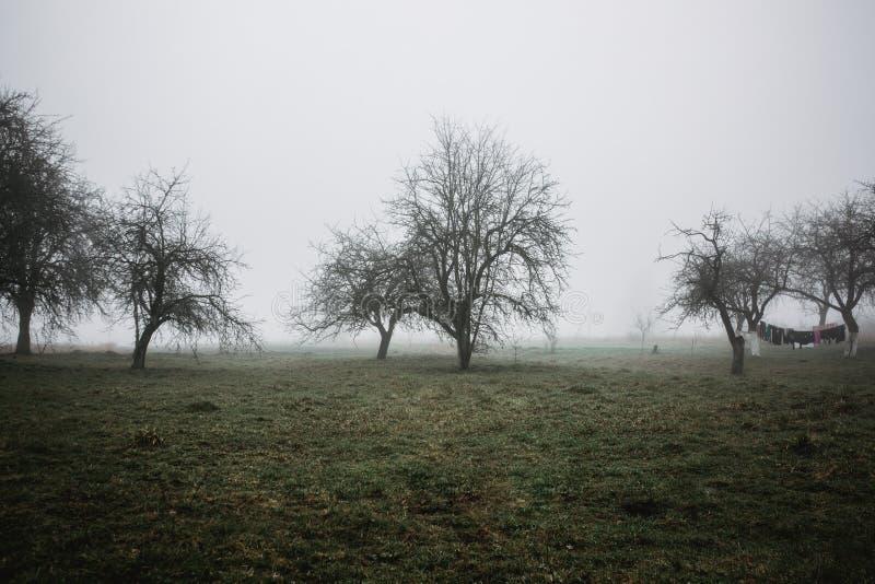 Paesaggio della nebbia in villaggio Vista mistica della natura Fondo di orrore Concetto di Halloween Gli alberi stanno in una fil immagini stock