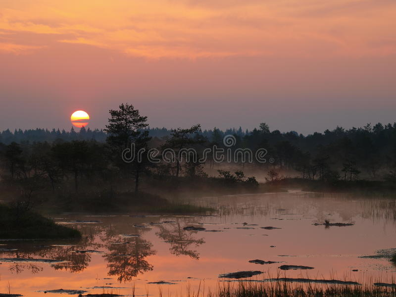 Paesaggio della palude di Kakerdaja fotografia stock