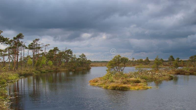 Paesaggio della palude di Marimetsa fotografie stock libere da diritti