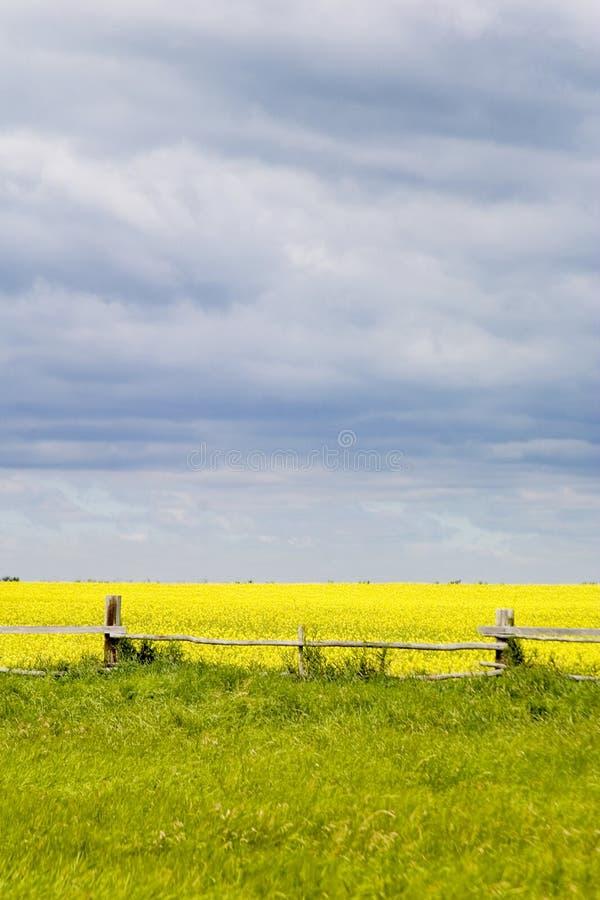 Paesaggio della prateria - linea di recinzione fotografia stock libera da diritti