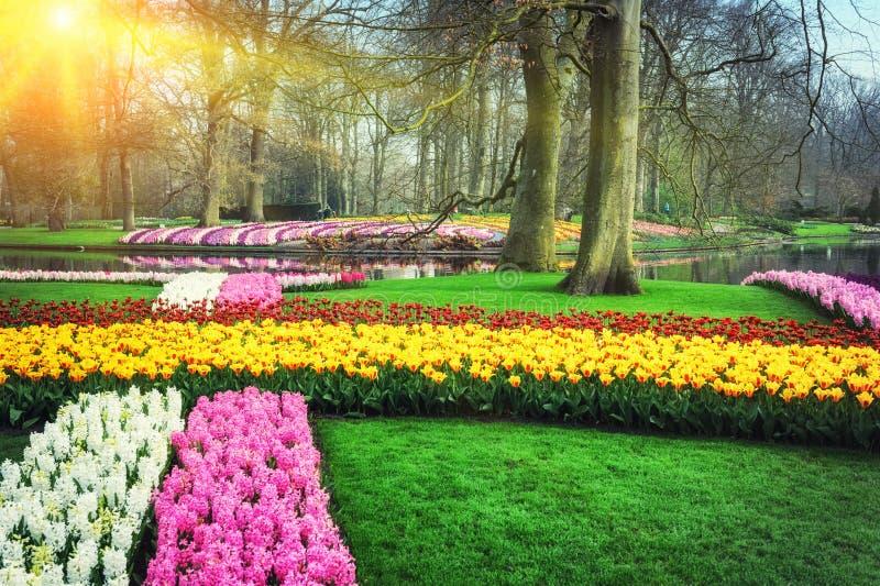 Paesaggio della primavera con i fiori variopinti immagine stock
