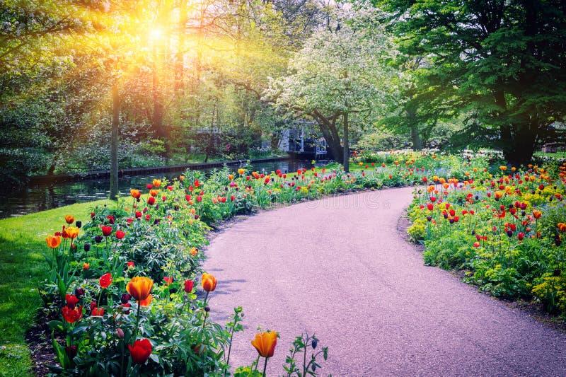 Paesaggio della primavera con i tulipani variopinti immagini stock