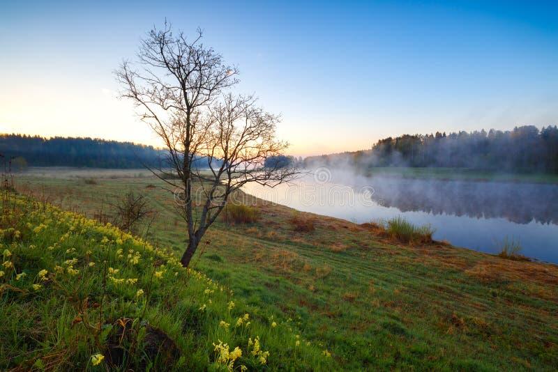 Paesaggio della primavera con il fiume nella mattina nebbiosa in anticipo Rivevr di Volga nella regione di Tver' fotografia stock libera da diritti