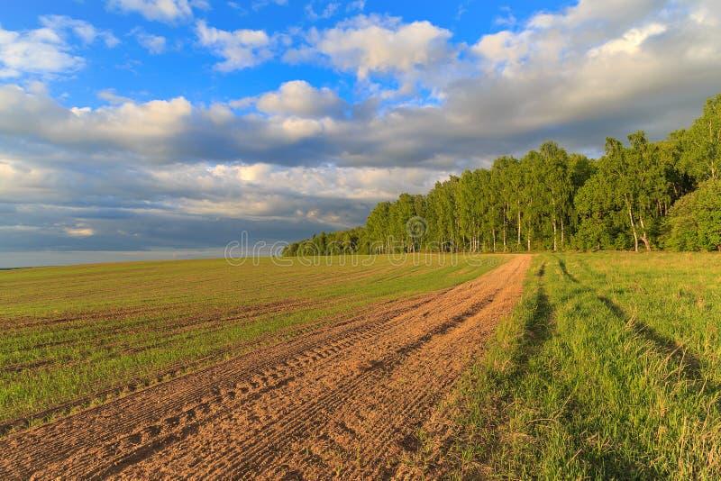 Paesaggio della primavera, foresta della betulla sull'orlo del campo fotografia stock libera da diritti